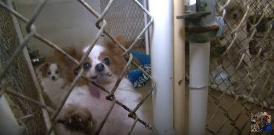 市場に出回る1匹の小型犬の背後で、大量の犬が犠牲になる商売の実態