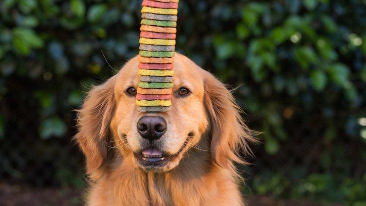 犬のごほうびにあげるオヤツはどんなものがいい?