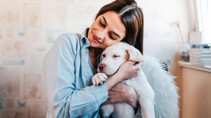 犬が『飼い主に飽きている時』にする仕草や態度3選