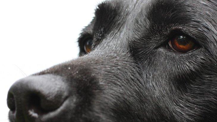 がん探知犬とは?検査内容や申し込み方法、評判や口コミまで