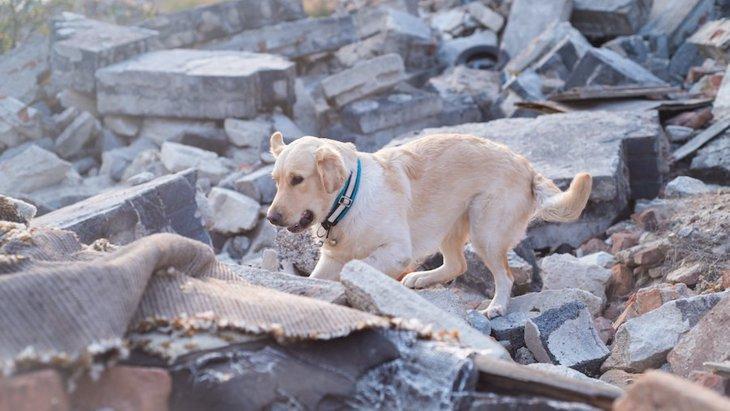 地震時、愛犬の安全はどう守る?同行避難や留守番中の安全対策について