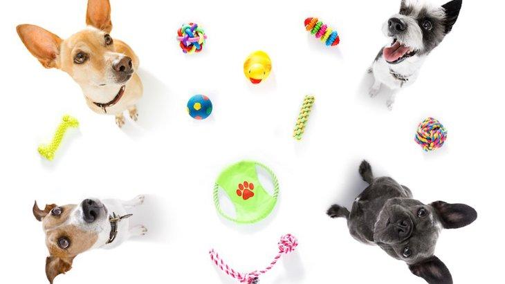 愛犬が成犬になって玩具への興味が薄れてきた時の対処法
