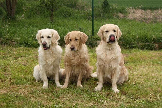 毛が抜けない犬と抜けるワンコの違いについて