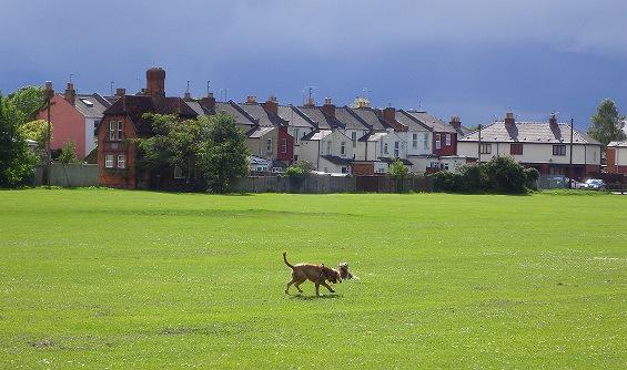 イギリスで危険といわれる犬たち ~動物愛護国イギリスわんこ事情~