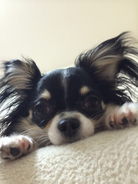 老犬の介護。目が見えない、立てない、ご飯の対策