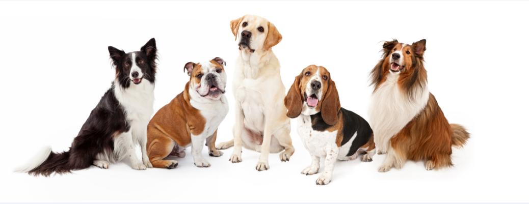 犬の性格は種類で全然違う!あなたにぴったりなタイプは?