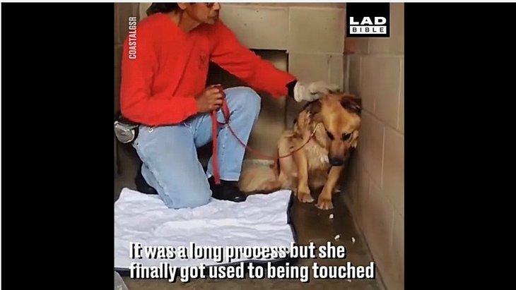 人馴れしていない犬に里親を決めるまでの涙ぐましい努力