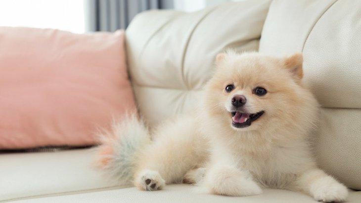 思ってたのと違う…犬との生活の理想と現実のギャップを埋める方法