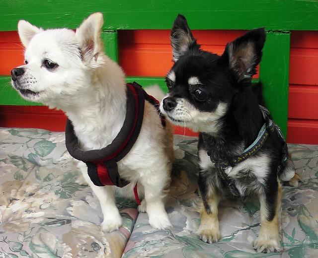犬の耳ダニの特徴や症状、取り方や治療法について