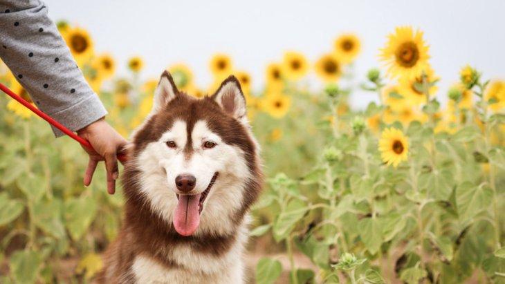 夏に潜む犬にとっての危険5つ