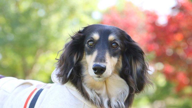 垂れ耳の犬種4選!それぞれの特徴や性格から飼う際の注意点まで