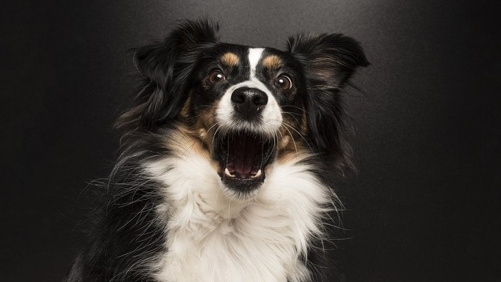 犬がビックリする人間の行動7選
