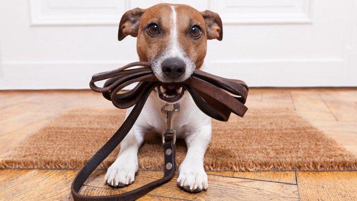 犬の散歩コースは毎日同じほうがいいの?