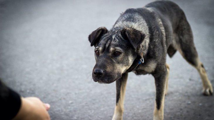 犬が自信を失っている時に見せる態度や行動5選