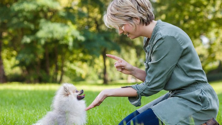 犬のしつけははっきりと!役立つ7つの言葉