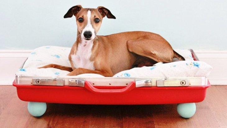 犬用ベッドDIY11選!手作りでこんなにオシャレに」