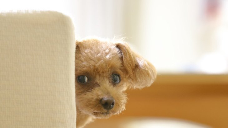 犬が『人見知り』している時の仕草や行動4つ
