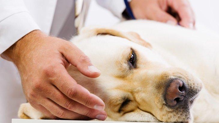犬の遺伝病と発症しやすい犬種