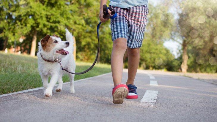 犬の散歩を子供だけにさせる時の注意点3つ