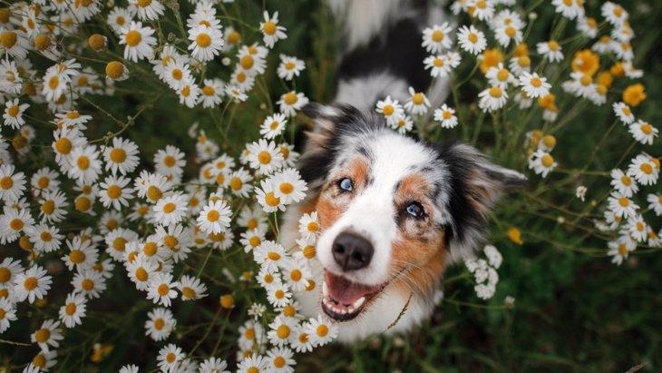 犬が幸せや喜びを表現している時に見せる行動や表情4選