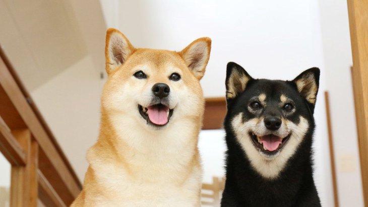 仲良しな犬同士が見せる行動8つ
