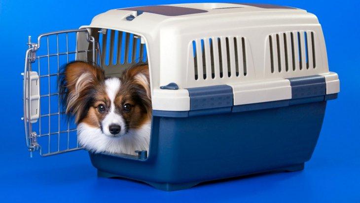 犬が地震前にする『異常な行動』5選!落ち着かせるためにやるべき対応とは?