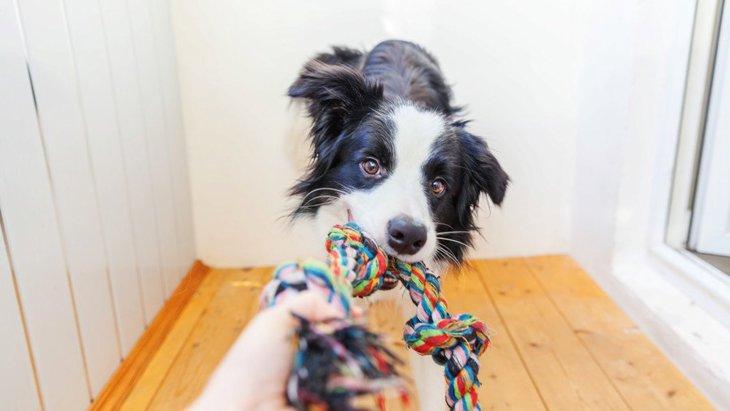 犬がすぐに飽きてしまうオモチャの特徴3つ!どんなおもちゃを与えるといいの?