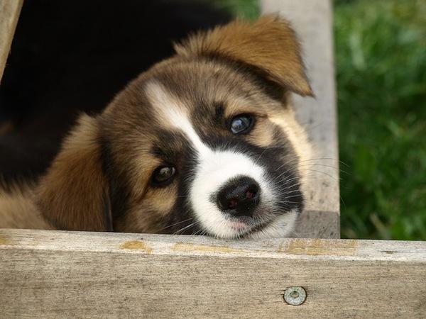 愛犬の体のしこりや腫れ!症状から考えられる病気