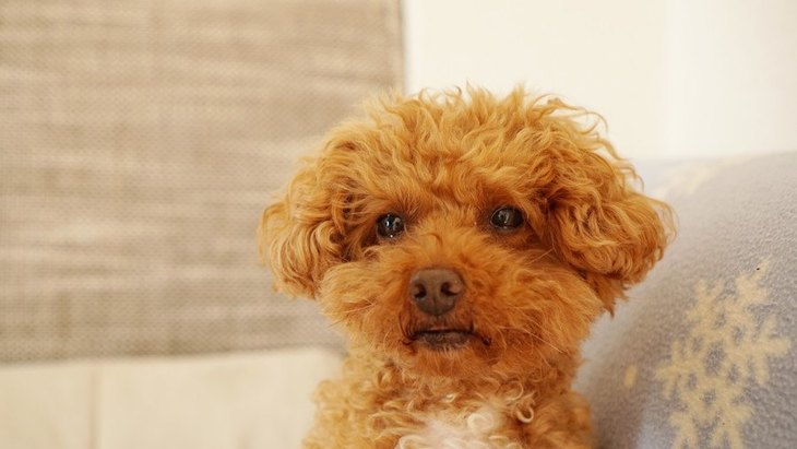 犬に対してイライラしてしまう危険性2選!本当に愛犬が悪いのかを考えてみて