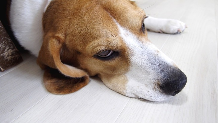 歩けないほどの痛さ!犬の『骨肉腫』の初期症状3つ