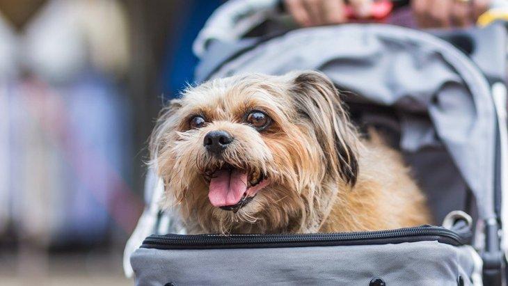 犬の飼い主が他人に言われがちな『嫌な言葉』3選