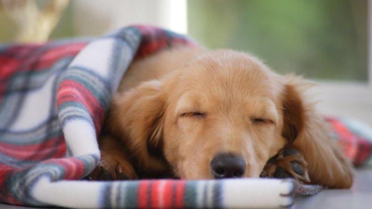 犬は『気温』で体調に変化がある?関係性や3つの注意点を解説