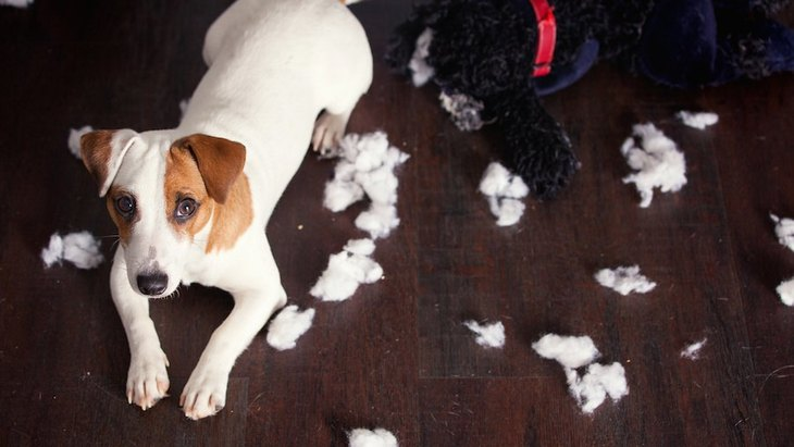 犬のイタズラにうんざり…でもついつい許しちゃう可愛い仕草7選