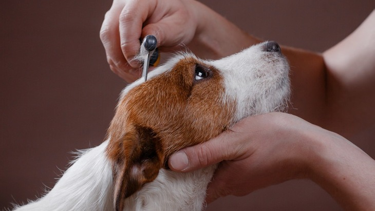 犬のブラッシングを怠ると起こる6つのこと