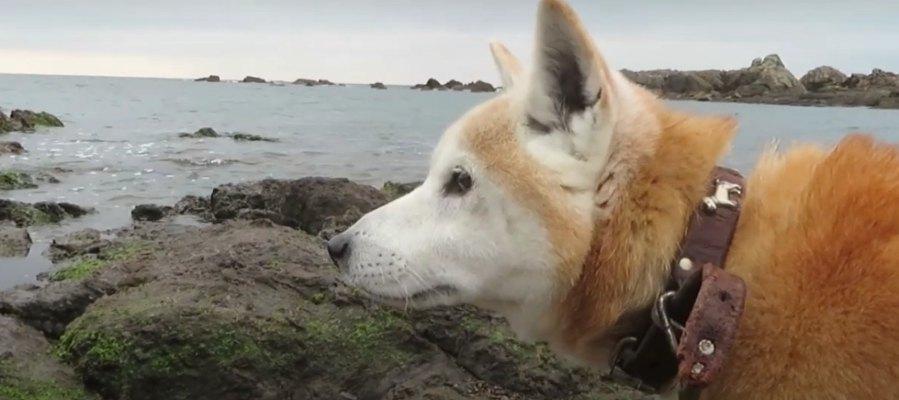 柴犬さんと海散歩♡穏やかに流れる時間に癒やされる!