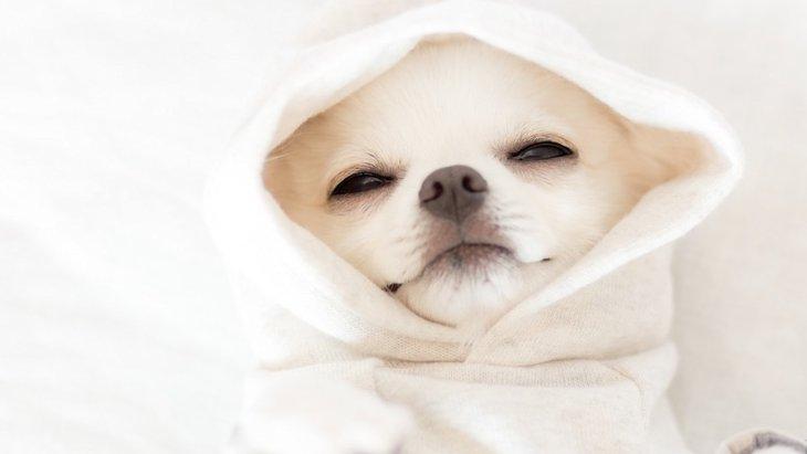 犬が寝てばかりいる5つの理由