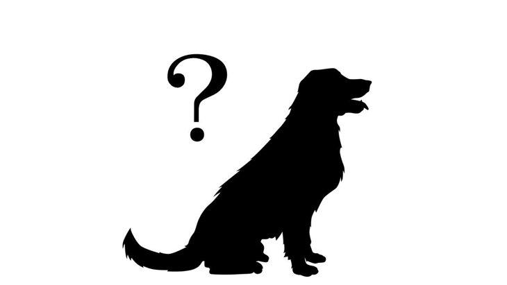 工藤静香さんの愛犬をリサーチ!種類やキムタクとのエピソードまで