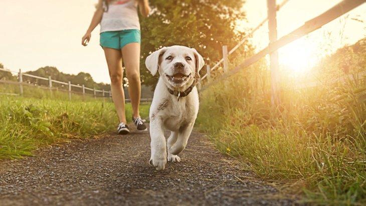 「ダメ犬」「悪い犬」はいない!飼い主が思う理想の犬に育てるためには