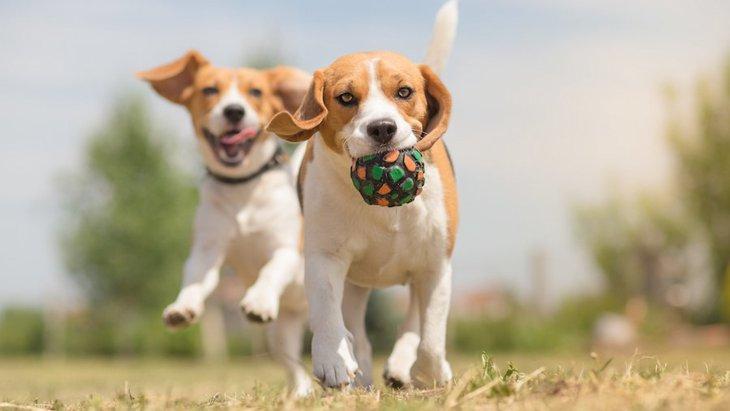 犬の行動研究や査定の時に必ず出て来る「C-BARQ」って何だろう?