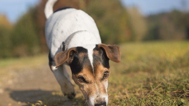 犬が嗅ぎ分けられる3つのもの