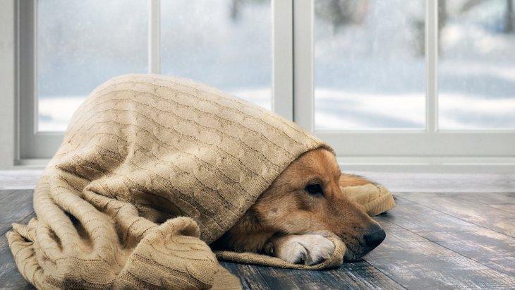 特に寒がりな犬種は?快適に過ごさせてあげる方法