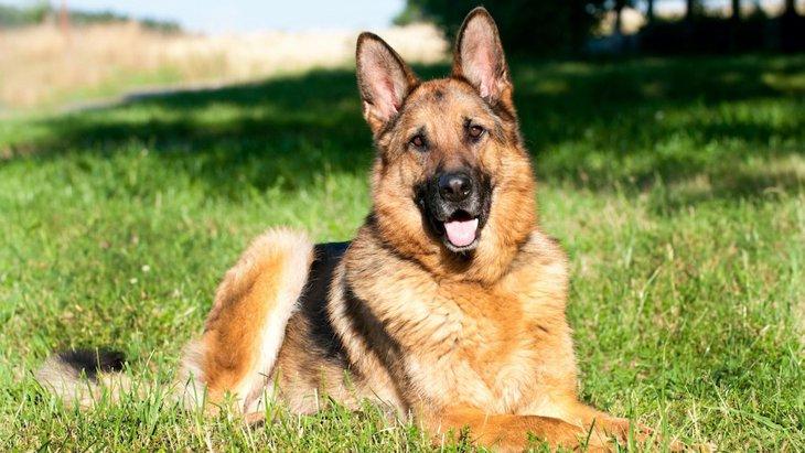 犬が持っている知能は人間で言う何歳レベル?犬種によって賢さに違いも