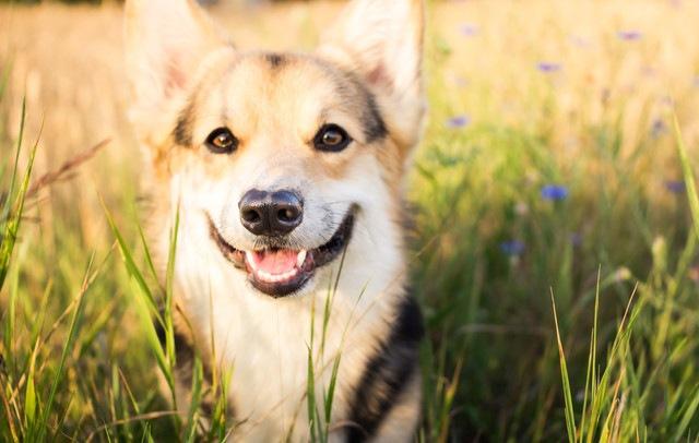 「犬に咬まれないために」YouTubeを使った犬の咬傷事故の研究結果