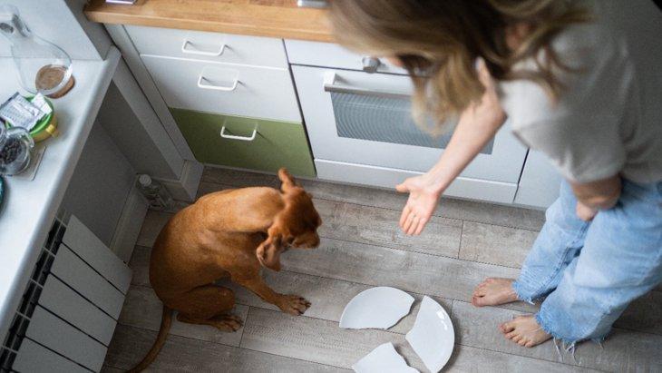 犬に絶対してはいけない『叱り方』4選!NGな理由から正しい方法まで解説