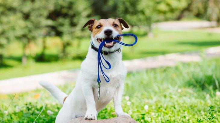 いつも大興奮!犬が散歩好きな理由3つ