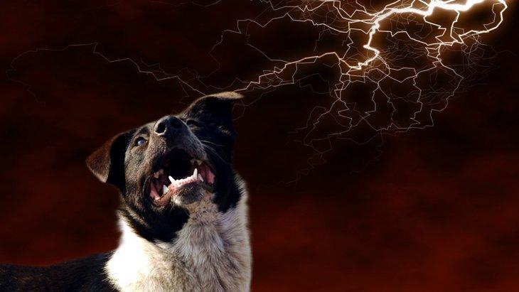 犬に静電気が与える影響と予防策