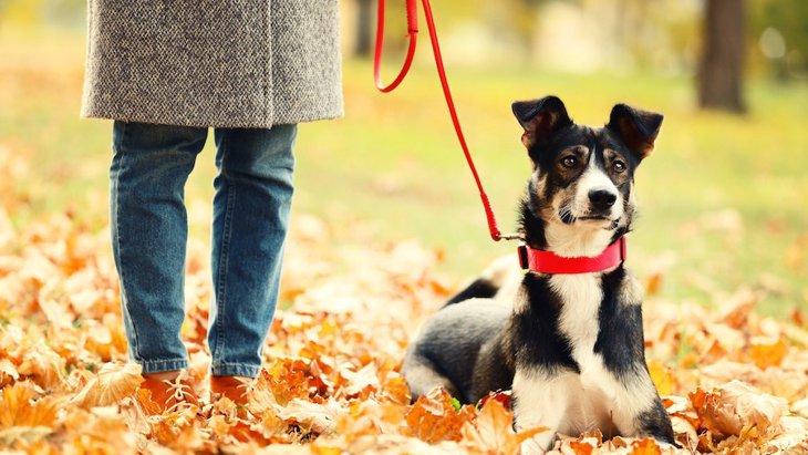 愛犬と一緒に紅葉狩り♡行き先選びのポイント7つ
