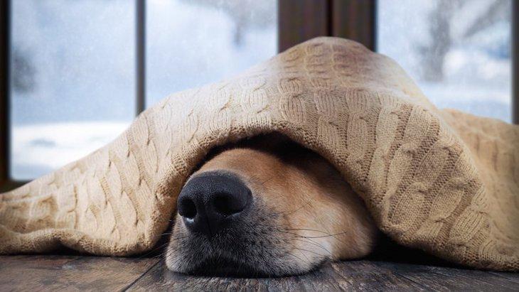 犬が鼻をフガフガ鳴らしている時の理由4つ
