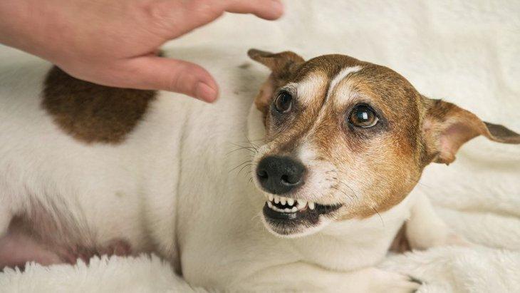 犬から唸られてしまう人がしているNG行為5選