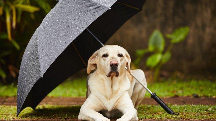 犬の散歩を雨の日にするとき、絶対に注意すべきポイント3選